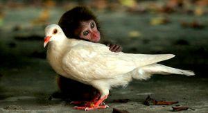 http://www.themindfulword.org/2012/love-hug-the-eightfold-path/